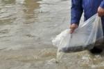 PELESTARIAN ALAM : Ribuan Ekor Ikan Ditebar di Telaga Menjer