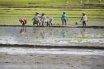 PERTANIAN SOLORAYA : Jarang Hujan, Petani Wonogiri Andalkan Pompa Air