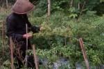HORTIKULTURA : Harga Jual Sedang Bagus, Petani Cabai Magelang Segera Tanam Benih