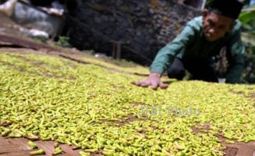 5 Komoditas Pertanian Ini Jadi Andalan Ekspor Sukoharjo Lho, Apa Saja?