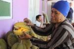 WISATA BUAH DI KLATEN : Waahh, Ada Rumah Durian di Karangnongko
