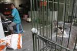 FOTO LIBUR LEBARAN : Kandang Penitipan Hewan Sudah Penuh