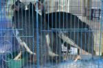 HEWAN PELIHARAAN : Pasar Burung Depok Siapkan Unggas Unik