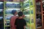 HEWAN PELIHARAAN : Ingin Ikan Hias? Belanja Saja ke Pasar Depok...