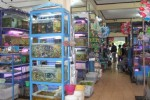 HEWAN PELIHARAAN : Ini Info Belanja di Pasar Depok bagi Penggemar Ikan Hias...