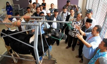 FOTO IDULADHA 2014 : IPB Gelar Pelatihan Penanganan Kurban