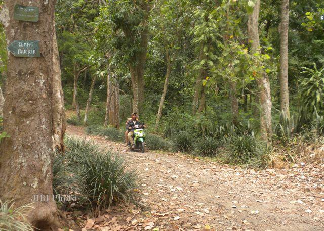 Kawasan Hutan Bromo Karanganyar Potensial Jadi Agro Eduwisata