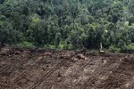 JOKOWI PRESIDEN : Lindungi Lahan Gambut, Greenpeace Desak Presiden Cabut Izin Perkebunan Sawit