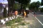Antisipasi Pohon Tumbang Saat Musim Hujan, DLH Bantul Lakukan Pemangkasan
