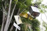 FOTO TAMAN KOTA SOLO : Tutupi Rambu, Dahan Pohon Dipotong