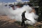 190 Warga di Karanganyar Terjangkit Chikungunya, Tasikmadu Terbanyak