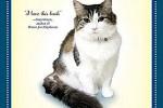 KISAH UNIK : Kucing Ini Bisa Meramal Kematian Manusia