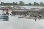 PENCURIAN SUKOHARJO : Antisipasi Maling Ikan, Petani Waduk Mulur Ronda