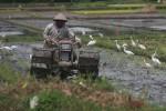 PERTANIAN BANTUL : Target 1.995 Hektare Tanaman Padi Baru Tercapai 35%