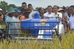 HASIL PERTANIAN : Jokowi Masih Hitung Impor Beras, Ini Alasannya