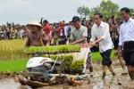 HASIL PERTANIAN : Jokowi Panen Padi Varietas IPB