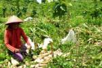 PENIPUAN MADIUN : Waspada! Penipu Berkedok Penawaran Kerja Sama Pertanian Madiun Berkeliaran