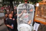 FOTO SOLO CENARY MANIA : SCM Kini Beraksi di Solo CFD