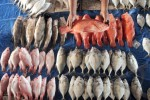 PERIKANAN JATENG : HNSI Jateng Ajak Nelayan Budi Dayakan Ikan