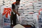 SWASEMBADA BERAS : 2016, Surplus Beras Kabupaten Malang Bisa 80.000 Ton