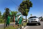 FOTO MASALAH LINGKUNGAN : Ring-road Kini Kembali Hijau