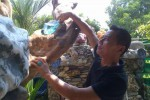 DEMAM BATU AKIK : Wow, di Rumah Ini Ribuan Bongkahan Batu Akik Jadi Hiasan Taman