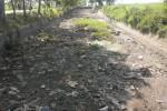 PERTANIAN SRAGEN : Air Waduk Gembong Susut, Petani Takut Gagal Panen