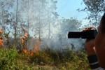 FOTO KEBAKARAN MADIUN : Cuaca Panas Picu Kebakaran Hutan