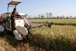 FOTO PERTANIAN JATIM : Mesin Panen Beraksi di Nganjuk