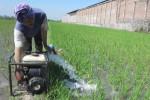 KEKERINGAN KLATEN : Petani Ceper Mulai Gunakan Pompa Air