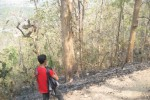 KEBAKARAN KLATEN : 3 Ha Lahan Bukit Jabalakat Terbakar
