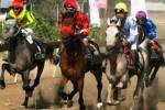 KEJURNAS PACUAN KUDA : 35 Kuda ke Final, Jateng Optimistis Juara Umum