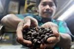 PERTANIAN JATIM : Kafe Kopi Makin Diminati, Petani Jatim Perbanyak Kopi Panggang