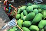 Pedagangan memborong mangga Madiun saat panen tiba (JIBI/Solopos/Antara/Siswowidodo)
