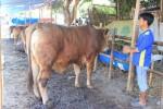 IDUL ADHA 2015 : Stok Hewan Kurban di Jateng Cukup