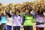 PENYERAPAN BERAS : Bulog Madiun Sudah Serap 20.000 Ton Beras Petani