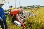 Pakar Ungkap Kejanggalan Impor Beras 500.000 Ton Jelang Panen