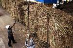 PENCEMARAN AIR : Kali Bedong Menghitam, PT. Madubaru Stop Produksi Empat Hari