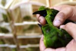 SATWA LANGKA : BKSDA Jatim Gagalkan Pengiriman 2.711 Burung ke Jakarta