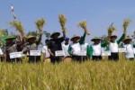 SWASEMBADA BERAS : Impor Beras di Tengah Musim Panen, Petani Protes