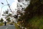 ANGIN KENCANG BOYOLALI : Awas! Pohon Cemara Tumbang di Jalur Solo-Semarang-Borobudur