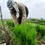 PERTANIAN KARANGANYAR : Sosialisasi Kartu Tani Kurang Optimal Bikin Petani Bingung
