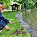 AGENDA PRESIDEN : Tak Cuma Burung, Jokowi Lepas Ratusan Kodok di Istana Bogor
