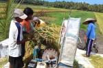 PRODUKSI PERTANIAN DIY : Petani Sayur DIY Diminta Prioritaskan Jual Hasil Panen ke Daerah Sendiri