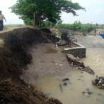 BANJIR SRAGEN : Ratusan Hektare Sawah Terancam Banjir, Petani Waswas