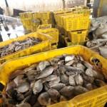 FOTO HASIL LAUT : Gelombang Tinggi, Tangkapan Ikan Turun 30 Persen