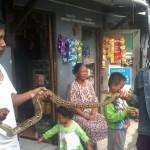 ULAR MISTERIUS : Warga Gang Anggrek Diteror Ular, Ini Tips dari Komunitas Pencinta Reptil