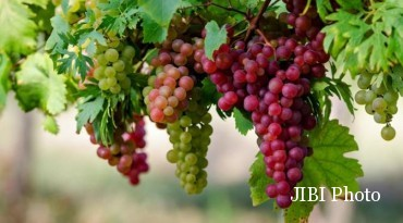 buah yang tidak boleh dimakan saat diet
