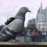 TEKNOLOGI TERBARU : Canggih, Pasukan Merpati Bantu Pantau Polusi Udara London
