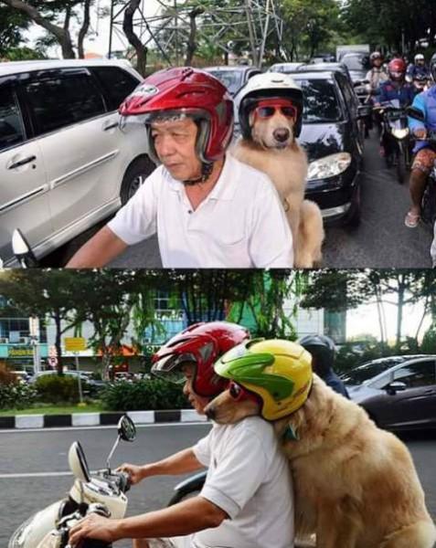 50+ Anjing naik sepeda terupdate